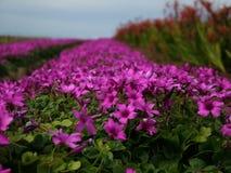 Purple After Rain. Purple wild flowers stock photos