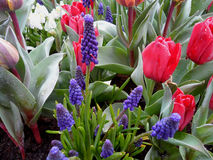 Purple and red blooming flowers in the gentle light rain Stock Photos