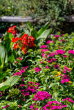 Purple and Red Flowers in Green Garden Royalty Free Stock Photography