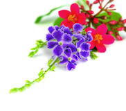 Purple and red flowers. Isolated. On white background Royalty Free Stock Photo