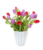 Purple and red tulips Royalty Free Stock Photography