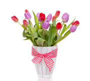 Purple and red tulips Royalty Free Stock Images
