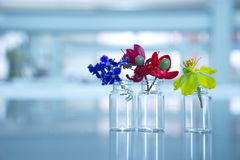 Purple red yellow flower in glass bottle or vial in science labo. Ratory background Stock Photos