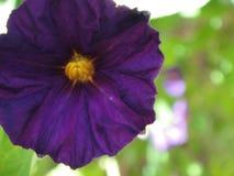 Purple Royalty Free Stock Photo