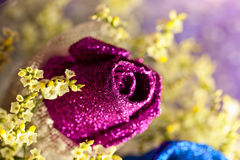 Purple Rose. A Purple Rose for lover, on Valentine's Day Stock Image