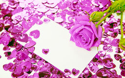 Purple rose and card Royalty Free Stock Photos
