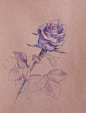 Purple rose drawing Stock Images