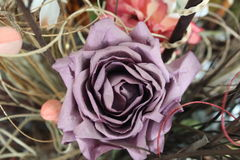 Purple rose. Good view of a purple flower Royalty Free Stock Photo