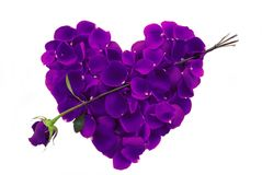 Purple Rose Petal Heart with arrow Stock Images