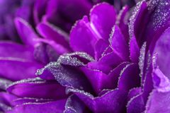 Purple Rose Petals background royalty free stock images