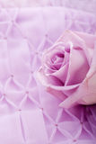 Purple rose for wedding Stock Photo