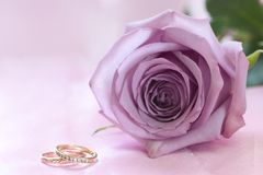 Purple rose and wedding rings. On pink background Royalty Free Stock Photo