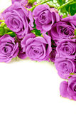 Purple roses. Bouquet on a white background Stock Photos
