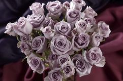 Purple roses. Large grouping of purple roses stock photos