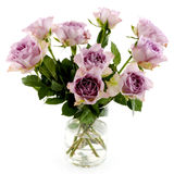 Purple roses. Isolated over white royalty free stock photos