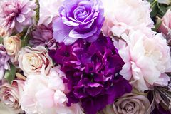 Purple roses. Beautiful purple roses for background royalty free stock image
