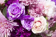 Purple roses. Beautiful purple roses for background stock photos