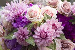Purple roses. Beautiful purple roses for background royalty free stock photo