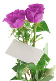 Purple roses with blank love note. Background is pure white Stock Photos