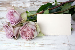 Purple roses bouquet and blank greeting card Stock Images
