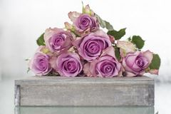 Purple Roses Bouquet Royalty Free Stock Image
