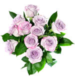 Purple roses Royalty Free Stock Image