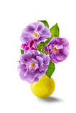 Purple roses bouquet on a white background isolated Royalty Free Stock Images