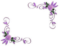 Purple roses corner border designs Stock Photo