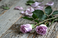 Purple Roses. Garden purple roses bouquet on rustic wooden table side view with copy space stock photography