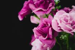 Purple Roses Royalty Free Stock Photos