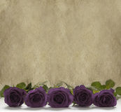 Purple roses on a rustic stone background. Row of Purple rose head on a rustic buff colored stone background Royalty Free Stock Photography