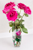 Purple roses in a vase Royalty Free Stock Image