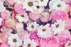 Purple roses and white daisy flowers bouquet for holiday backgro Royalty Free Stock Images