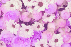 Purple roses and white daisy flowers bouquet for holiday backgro. Closeup of purple roses and white daisy flowers bouquet for holiday background Royalty Free Stock Photography