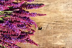 Purple salvia flowers on rustic wooden background. Top view, copy space stock photography