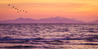 Purple sea after sunset at the beach. Of Follonica in Tuscany Stock Photos