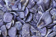 Purple sea shells background Stock Images
