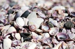 Purple shells background Stock Photo