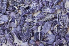Purple sea shells in sand Stock Photos