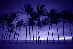 Purple Silhouette of Tall Palm Trees Stock Photos