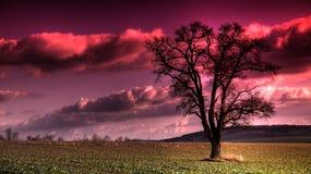 Purple sky. Purple strange sky over Bavaria Stock Photos