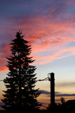 Purple sky. Tree standing in front of blue and purple evening sky Stock Image