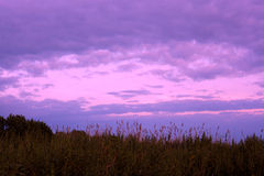 Purple Sky Behind Meadow. The sun has set leaving behind a purple hue in the sky. A meadow is now dark due to the lack of light. Streams of clouds fill the sky Royalty Free Stock Images