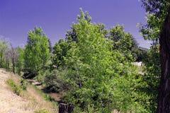 Purple Sky. A deep blue, purple sky highlights the forest landscape Royalty Free Stock Photos