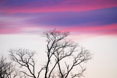 Purple Sky over trees. Trees below purple sky at sunset stock photography