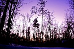 Purple sky in winter Royalty Free Stock Photo