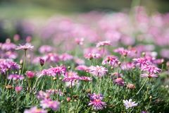 Flowers in spring stock photography