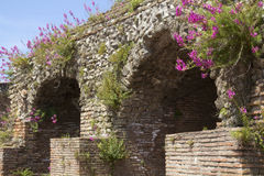 Purple snapdragons on walls of the Roman Theater in Benevento, Italy. Royalty Free Stock Photo