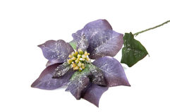 Purple snow star flower Royalty Free Stock Photos