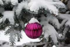 Purple sphere on a blue fur-tree. In forest Stock Photo